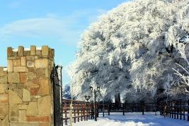 arodstown-under-snow